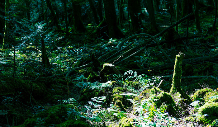Aokigahara – les sebevrahů v Japonsku