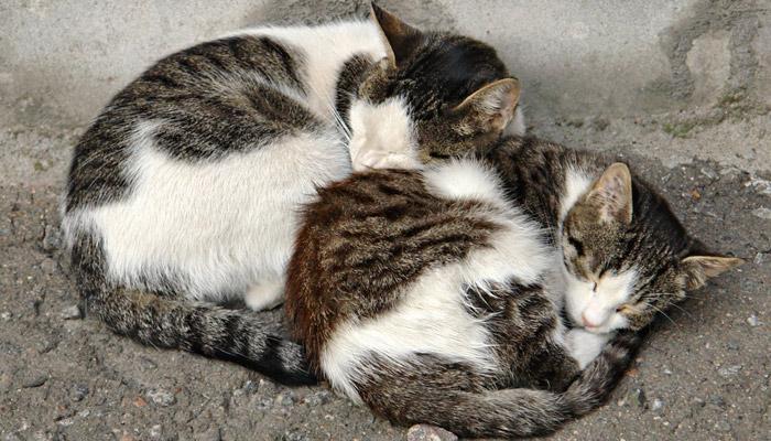 Záhada kočičího předení