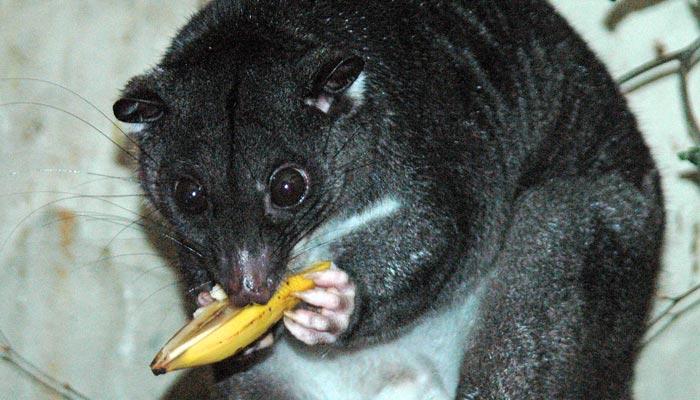 Kuskus není jen jídlo