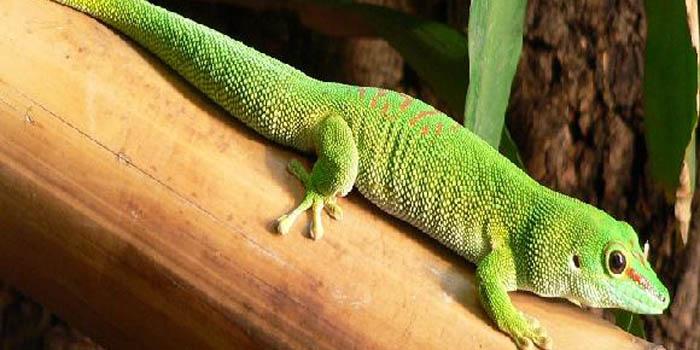 Unikátní zvířena Madagaskaru