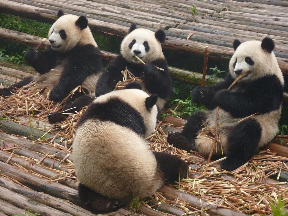 Zoo bez mříží v San Diegu