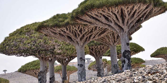 Sokotra – nádherný ráj endemitů