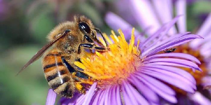Včely mají rády kofein