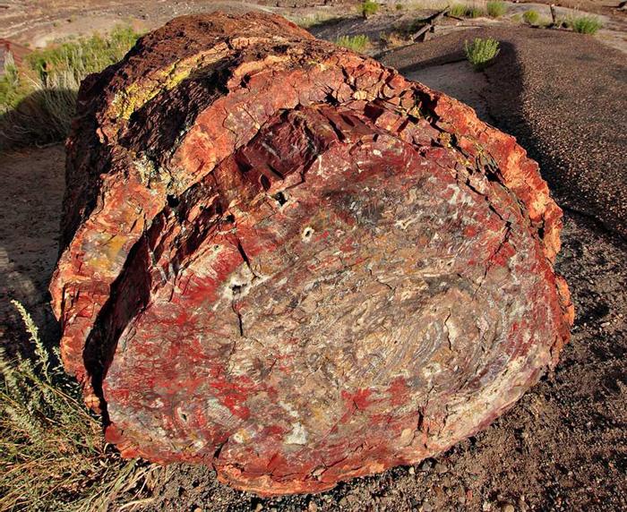 Zkamenělý les v Arizoně tvoří polodrahokamy