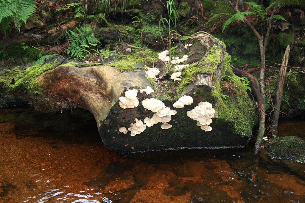 Přírodní rezervace Žofínský prales