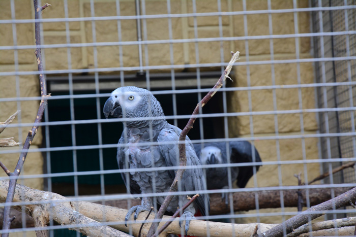 Papouščí zoologická zahrada v Bošovicích