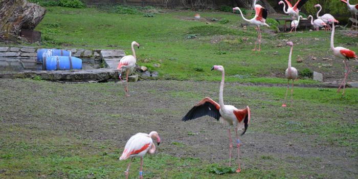 Zoopark v Chomutově – největší ZOO v ČR